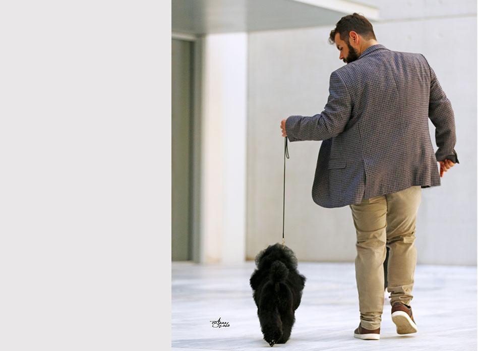 σχολή pet grooming, σχολή για κούρεμα σκύλων, ακαδημία dog groomers